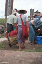 to Jpeg K Men carry their purchases back to their boat wearing their longyis woven with indigo dyed thread - Nampan market, Lake Inle, Shan State 9809o19.jpg