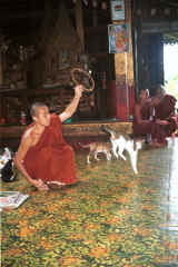 to Jpeg 37K A cat jumping through a hoop for one of the monks at Nga Phe Kyaung monastery, Lake Inle, Shan State, Myanmar 9809Q15.JPG