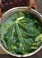 to 79K Jpg - pot containing yarn mixed with mordant ingredients for Morinda (papaya leaf, candlenut, loba leaf), to be heated up on the fire, Watublapi