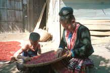 to Jpeg 32K Blue Hmong woman and boy sorting red beans at a village along the road between Chiang Mai and Fang 8812n36