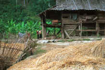 to Jpeg 48K The elephant mahouts' lodgings near Mae Hong Son, northern Thailand 8812j22.jpg