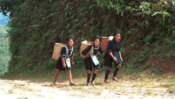 Jpeg 29K Black Hmong girls climbing back to their village in the hills around Sa Pa, Lao Cai Province 9510K15.JPG