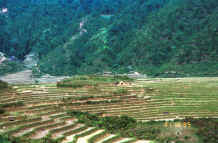 to Jpeg 42K The terraced rice fields worked by the Black Hmong in the hills around Sa Pa, Lao Cai Province 9510K19.JPG