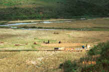 to Jpeg 37K Black Hmong harvesting the rice in the fields at the bottom of a valley in the hills around Sa Pa, Lao Cai Province 9510K20.JPG